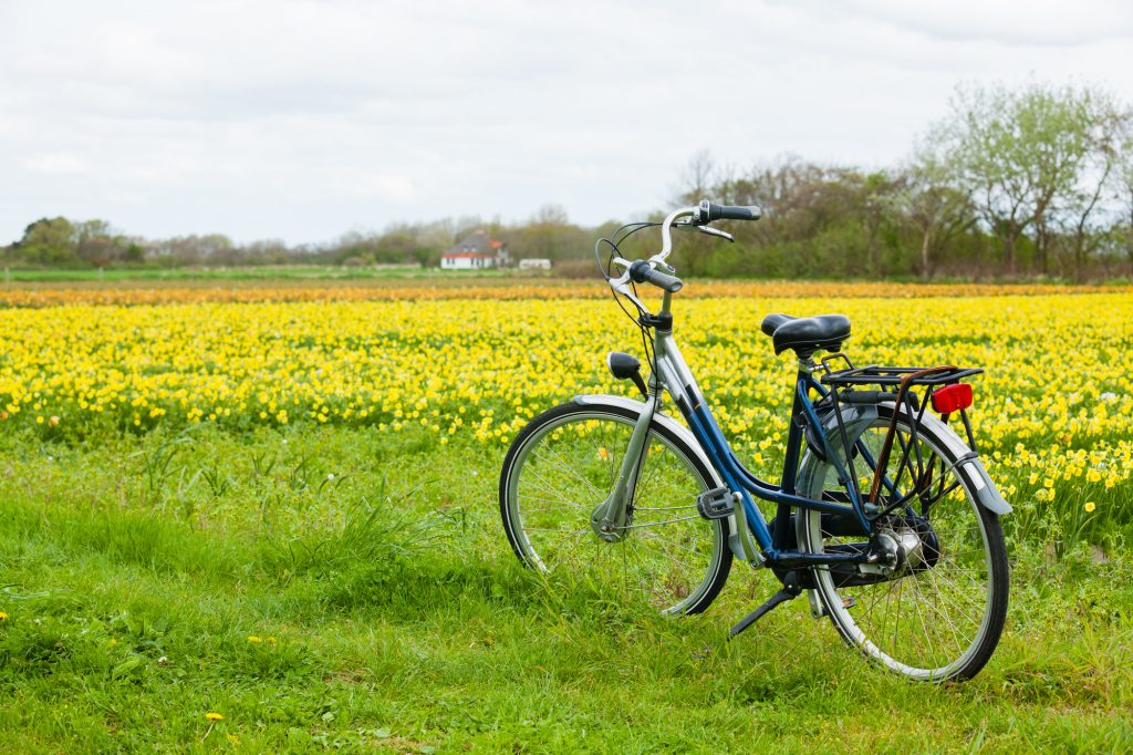 Kupuj używane rowery holenderskie