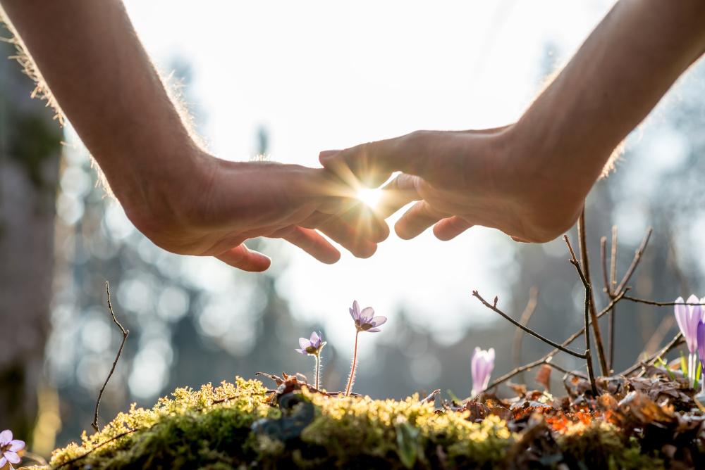 dłonie nad wzrastającą rośliną
